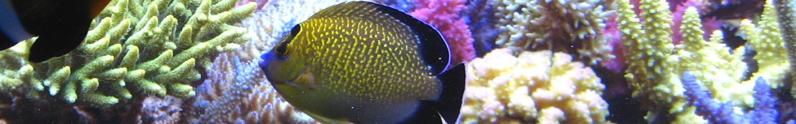 Fischfutter & Fisch Pflegeprodukte