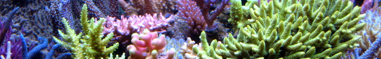 lebende steine f r korallen im meerwasseraquarium kaufen online shop. Black Bedroom Furniture Sets. Home Design Ideas