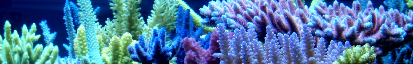 Aquarium Lampen