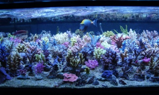T5 Coral Light New Generation 39 W