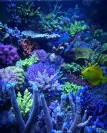 Aquarium 360x90x65