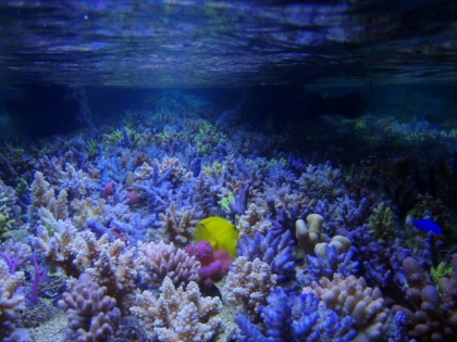 T5 Coral Light New Generation 24 W