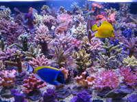 T5 Coral Light Fiji Purple 54 W